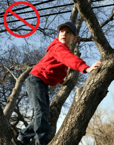 Boy in tree near power lines