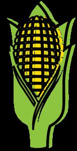 Illustration of ear of corn